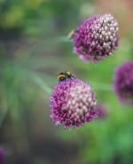 Wilson Lloyd Landscaping_Banstead_Surrey (34)