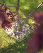 Wilson Lloyd Landscaping_Gerrards Cross_Bucks (10)