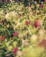 Wilson Lloyd Landscaping_Banstead_Surrey (13)